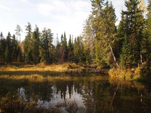 Осень в Висимском заповеднике