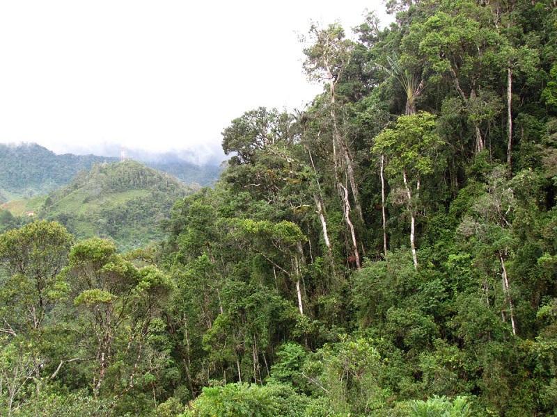 Мадагаскар. Тропический лес Раманофана