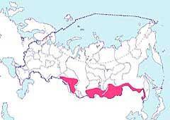 Азиатский Бекасовидный Веретенник (Limnodromus semipalmatus)